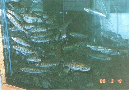fish_rest8