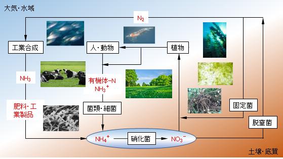 nitrogen-cycle-system