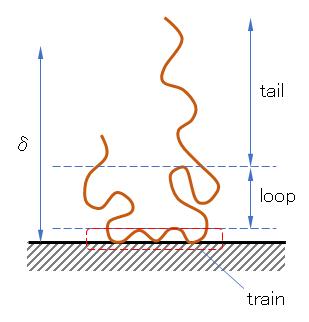 polymer-sorption-model