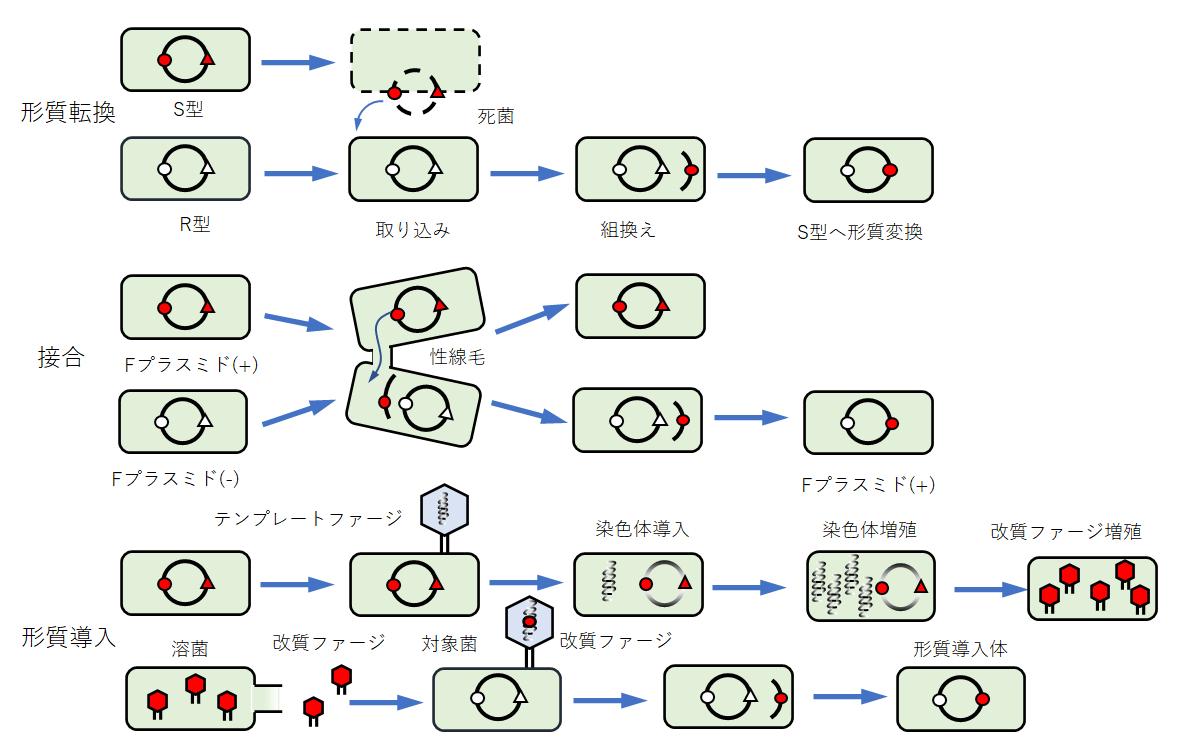 bacteria-heredity-modifications