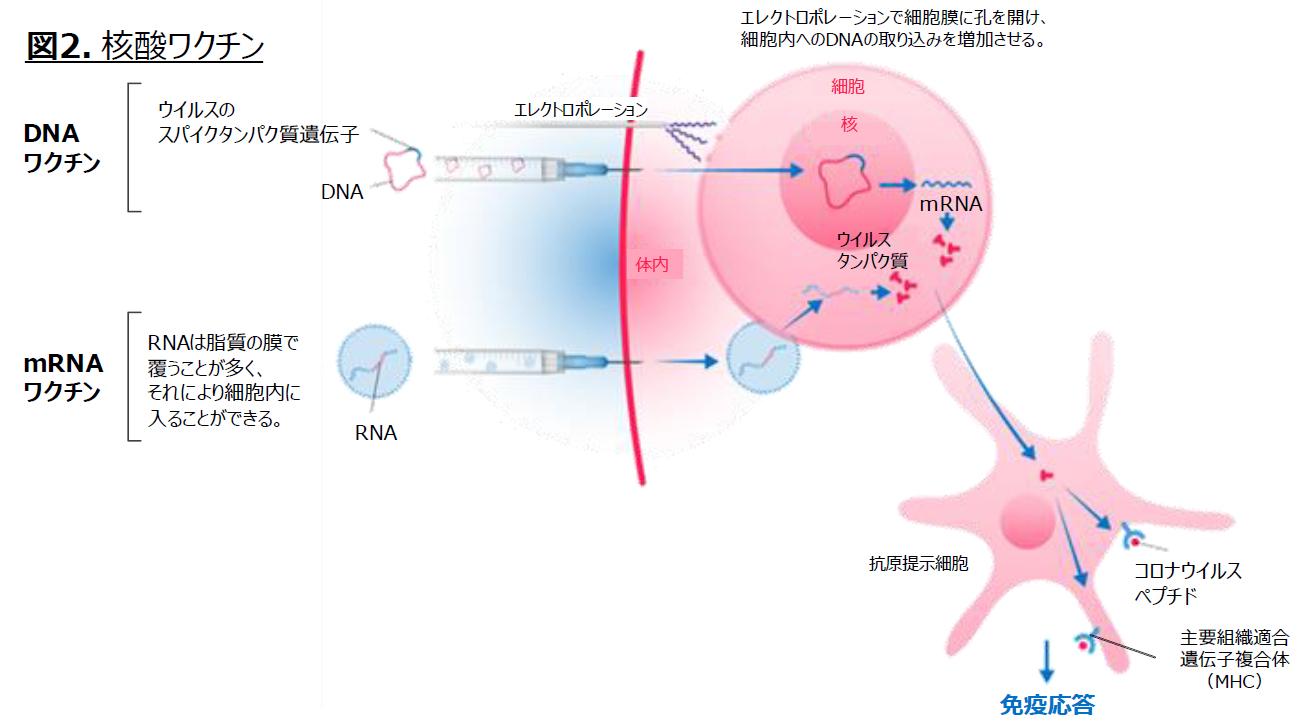 nucleic-acid-vaccines