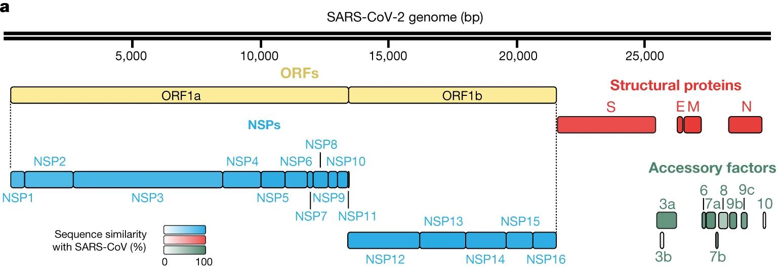 sars-cov-2-genome